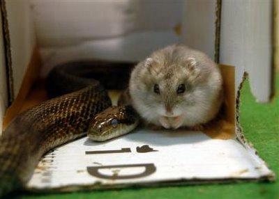 Hamster and snake