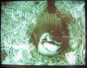 Nest cam 11/05/05